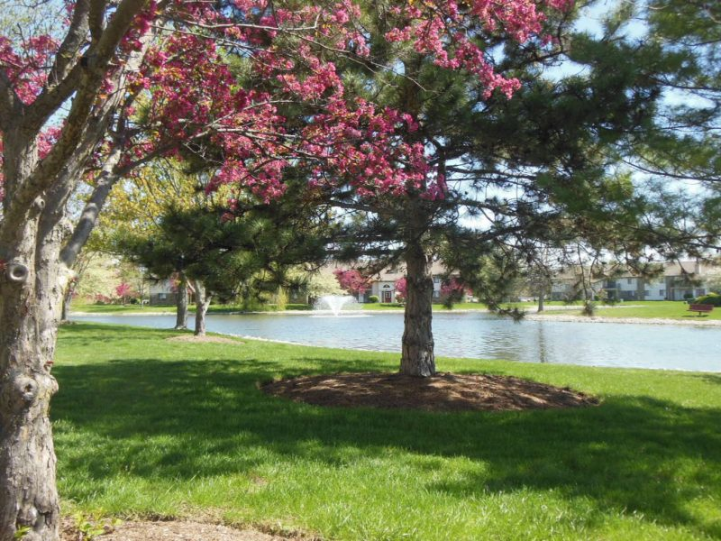 This image shows the scenic community garden featuring the cozy atmosphere and the warm pond that were ideal for picnics and relaxation.